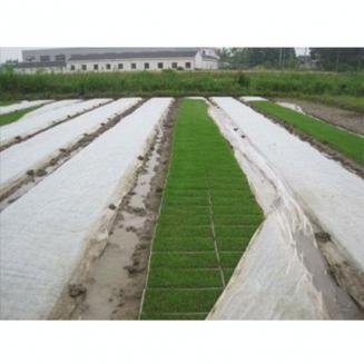 农业绿化封面